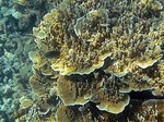 ヤサワ諸島 ナズラ島 ナロバ湾 サンゴ礁シュノーケリング7