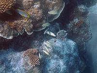 ヤサワ諸島 ナズラ島 ナロバ湾 サンゴ礁シュノーケリング1