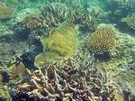 ナビティ島シュノーケリング:カラフルなサンゴ礁とお魚