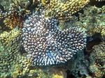 ナビティ島シュノーケリング:ハートの珊瑚