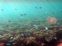 ナビティ島シュノーケリング:夕方の弱い光に輝く魚