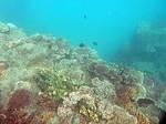 ナビティ島シュノーケリング:サンゴ礁のエッジがいきなり現れる
