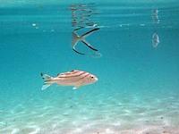 ブルーラグーン シュノーケリング1 浅瀬で泳ぐ魚たち