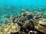 ブルーラグーン シュノーケリング サンゴ礁とお魚の群れ2