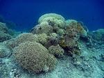 バンダ島マロレビーチのサンゴ礁2