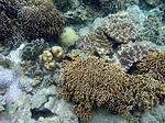 バンダ島マロレビーチのサンゴ礁3