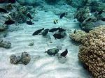 バンダ島マロレビーチのサンゴ礁4