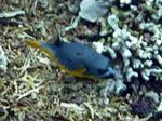 バンダ島マロレビーチのサンゴ礁5