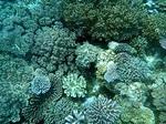 ハッタ島の水中写真3 サンゴ礁