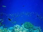 ハッタ島の水中写真6 魚の群れ
