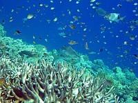 アイ島北部ビーチの水中写真1