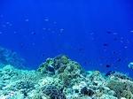 アイ島西部ビーチの水中写真5