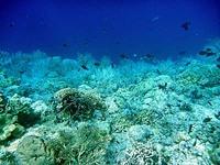 アイ島西部ビーチの水中写真2