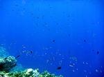 アイ島西部ビーチの水中写真6