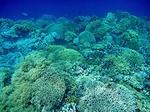 アイ島西部ビーチの水中写真3