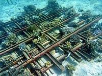 イボイの海中に沈めてある鉄骨