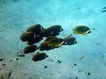 イボイの水中写真3