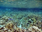 イボイの水中写真5