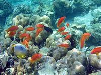 イボイの水中写真2