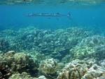 イボイの水中写真6