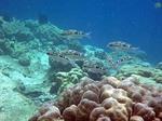 イボイの水中写真7