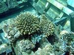 沈没船の中のサンゴ