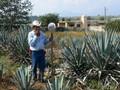 メキシコ個人旅行 2008年10~11月
