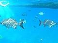 カリブ海のダイバーズパラダイス:コスメル島