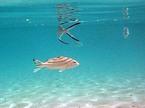 フィジー/ヤサワ諸島の旅:ナズラ島で自慢の食事とサンゴ礁を楽しむ