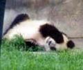 成都探訪。町歩きとパンダ見物。(1999.08.13-15 成都)