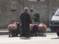 エジプト(ルクソール)の犠牲祭:祭りに備えて町中羊だらけ。