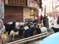 エジプト個人旅行 2006年12月~2007年1月