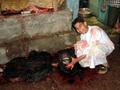 エジプト(ルクソール)の犠牲祭:屠られた牛を目撃