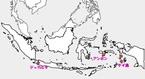 インドネシア(ケイ島)個人旅行 2015年9月