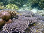 ケイ・クチル島の珊瑚と魚