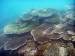 コンダオ島の水中写真