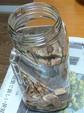 鹿茸酒を造る2