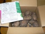 北海道産ジャガイモ トヨシロとエプロンチョ