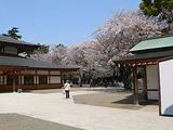 靖国神社のサクラ