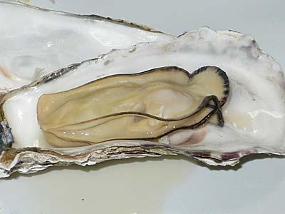 志津川産 牡蠣の酒蒸し 殻をむいたところ