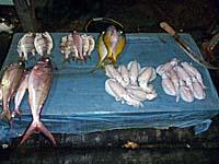 港の近くで売っている魚