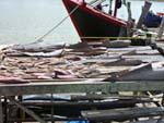 鮫のヒレなどを干しているところ