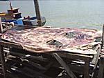 綺麗に剥がされた鮫の皮