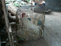 雑貨屋の軒先にいた鶏
