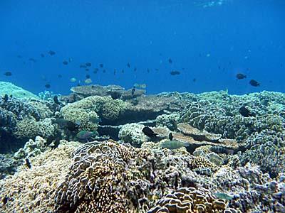 バンダ島北部マロレビーチのサンゴ礁