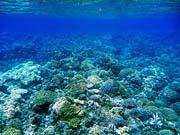 ハッタ島周辺のサンゴ礁