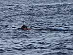 のんきに泳ぐフランス人の親父