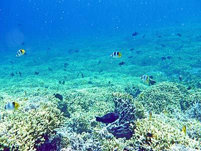 グヌンアピの裏側のサンゴ礁