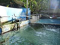 温泉の湯の噴出口