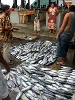 バンダネイラの魚市場